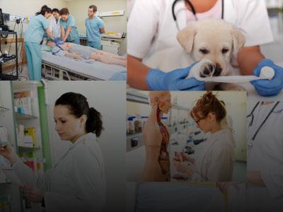 التخصصات-الطبية